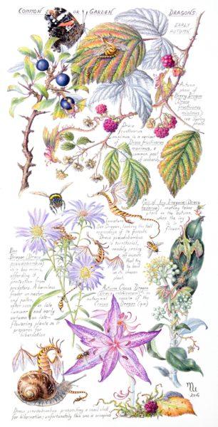 Common or Garden Dragons: Early Autumn