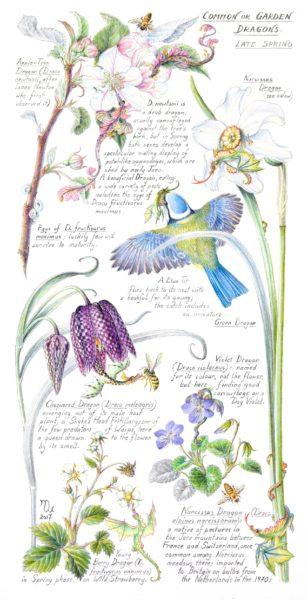 Common or Garden Dragons - Late Spring