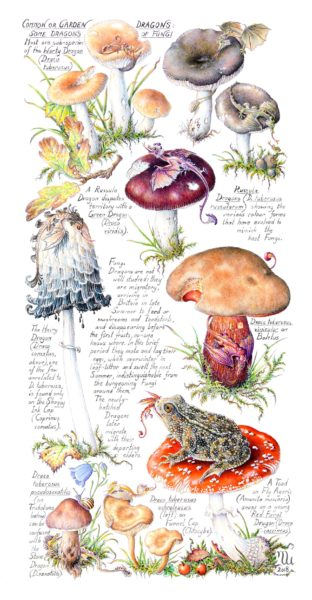 Common or Garden Dragons: Some Dragons of Fungi