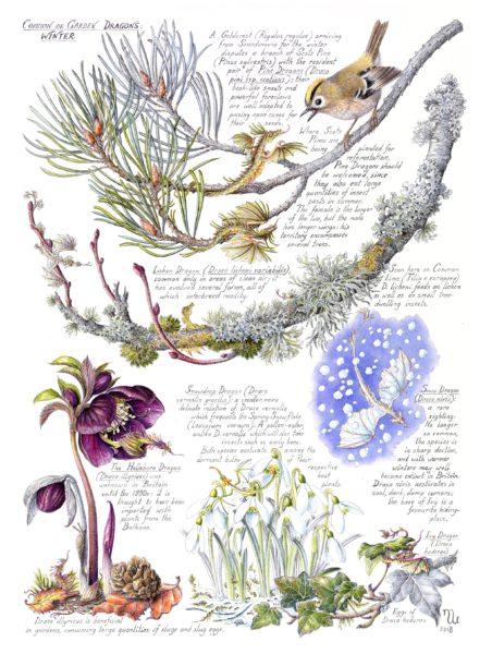 Common or Garden Dragons: Winter
