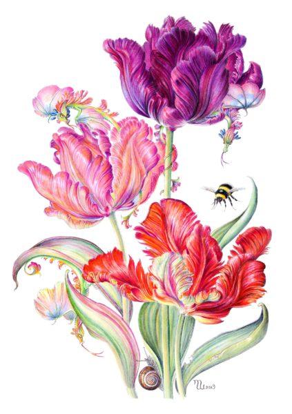 Tulip Dragons